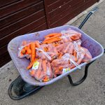 wheelbarrow full of carrots
